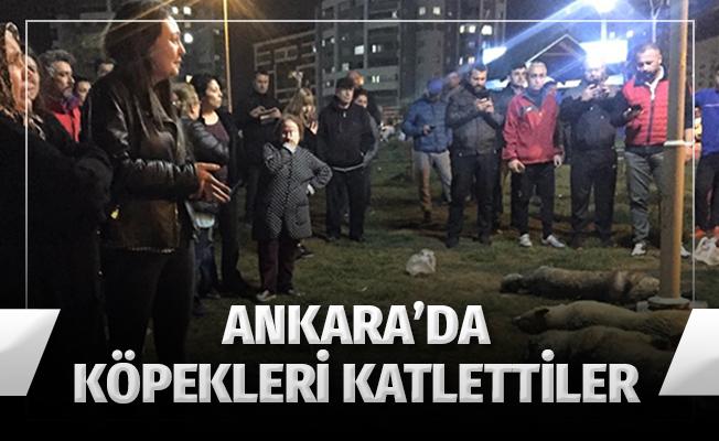 Ankara'da Köpekleri Katlettiler (VİDEO)