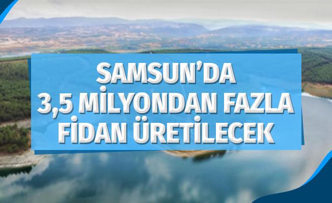 Samsun'da 3.5 Milyondan Fazla Fidan Üretilecek