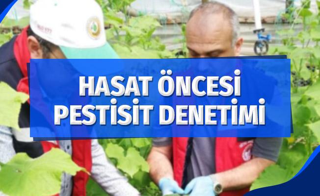 Hasat öncesi pestisit denetimi