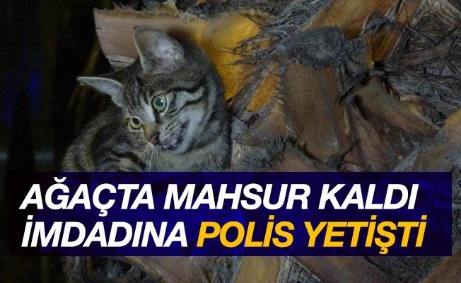 Ağaçta mahsur kalan yavru kediyi polis kurtardı