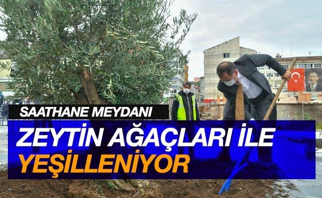 Saathane Meydanı zeytin ağaçları ile yeşilleniyor