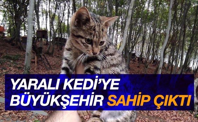 Yaralı kediye Büyükşehir sahip çıktı