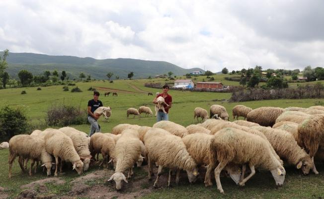 'Sertifikalı çoban' olacaklar
