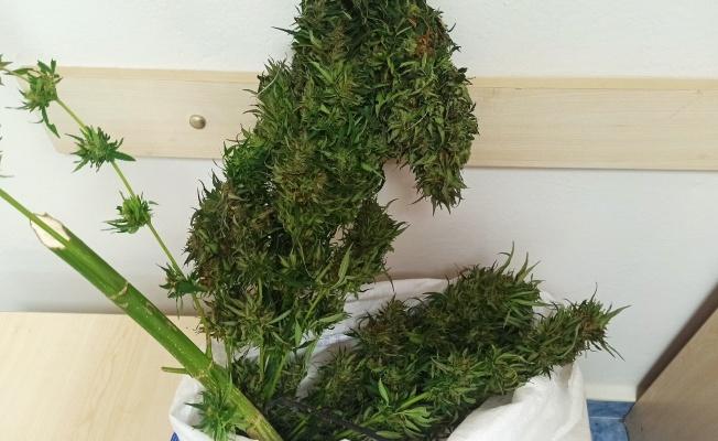 Samsun'da 1 kilo 200 gram skunk bitkisi ele geçirildi