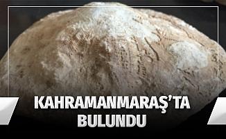 Kahramanmaraş'ta 35 milyon yıllık fosil bulundu