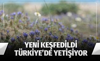 Yeni keşfedildi, Türkiye'de yetişiyor