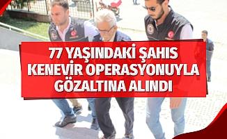 77 yaşındaki şahıs kenevir operasyonunda gözaltına alındı