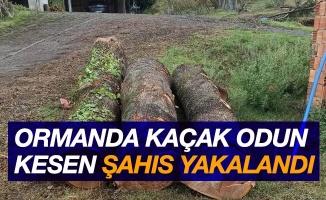 Ormandan kaçak odun kesen şahıs yakalandı