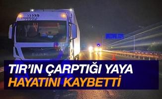 Samsun'da tırın çarptığı yaya hayatını kaybetti