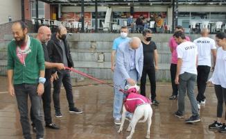 OMÜ çalışanı ve öğrencilerine AFAD'dan temel köpek eğitimi