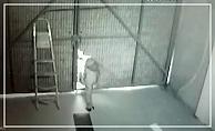 Suç Makinası Çete Çökertildi